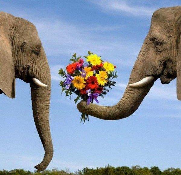 amour d'éléphant